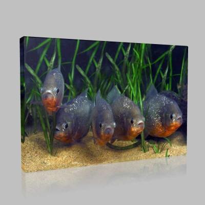 Tropikal Balıklar Kanvas Tablo