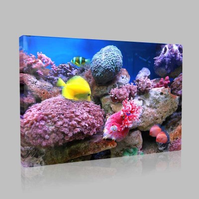 Tropikal Denizaltı Canlıları Kanvas Tablo