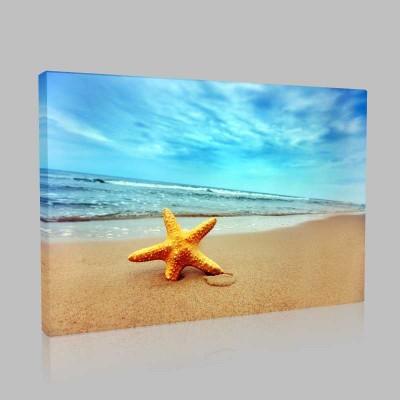 Turuncu Deniz Yıldızı Kanvas Tablo