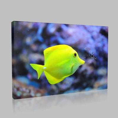 Yeşil Akvaryum Balığı Kanvas Tablo