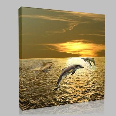 Dolphins At Play1 Kanvas Tablo