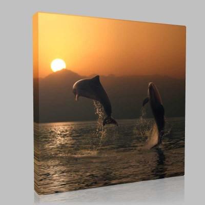 Dolphins At Play5 Kanvas Tablo