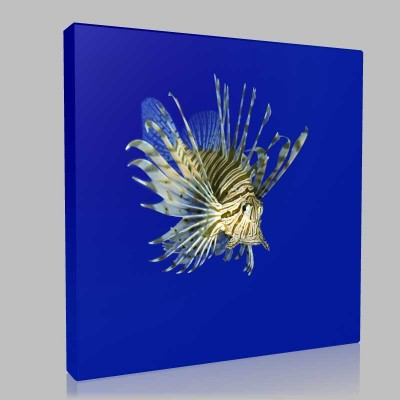 Lionfish 2 Kanvas Tablo