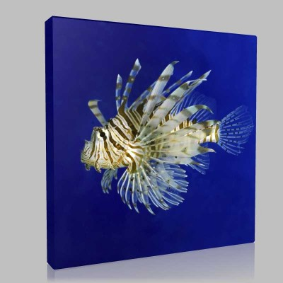 Lionfish Kanvas Tablo