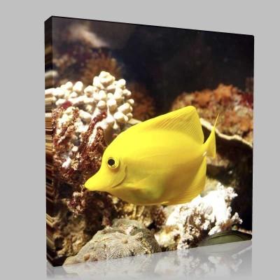 Sarı Balık 1 Kanvas Tablo
