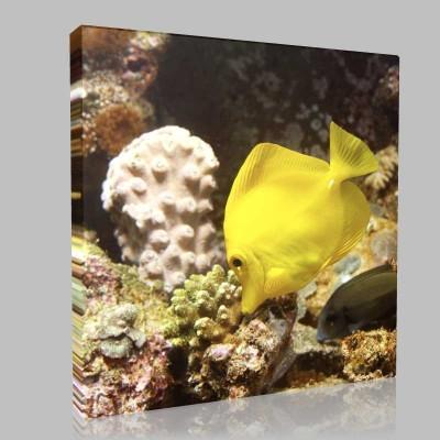 Sarı Balık 2 Kanvas Tablo