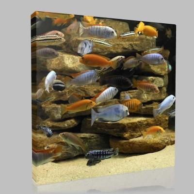 Tropical Fish Kanvas Tablo