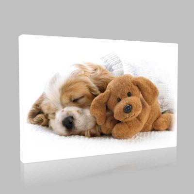 Ayıcıkla Uyuyan Köpek Kanvas Tablo