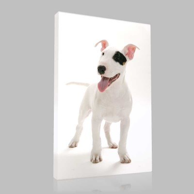 Bull Terrier 2 Kanvas Tablo