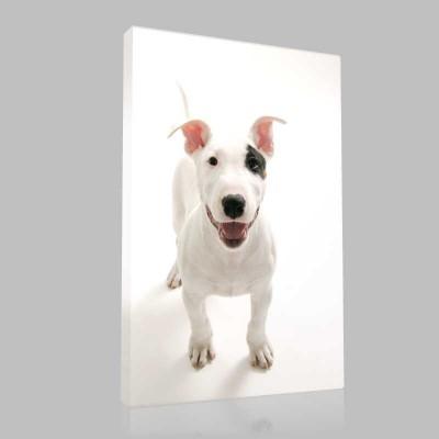 Bull Terrier 4 Kanvas Tablo