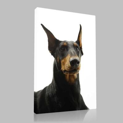 Doberman Portre Kanvas Tablo