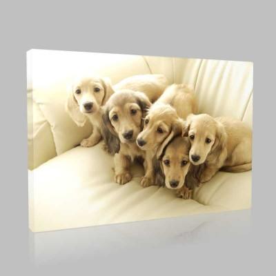 Golden Retriever Kardeşler Kanvas Tablo