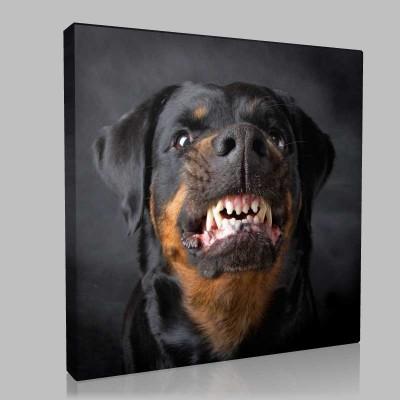 Kızgın Köpek Kanvas Tablo