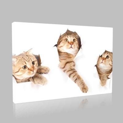 Şaşkın Bakışlı Sarı Kediler Kanvas Tablo