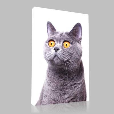 Şaşkın Kedi Kanvas Tablo