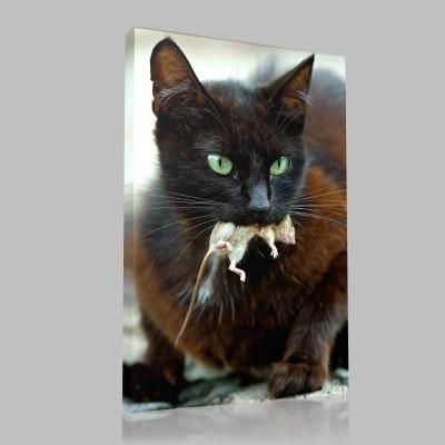 Acıkmış Kedi Kanvas Tablo
