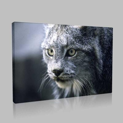 Büyük Kedi Kanvas Tablo