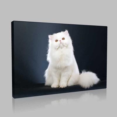 Beyaz Pamuk Kedi Kanvas Tablo