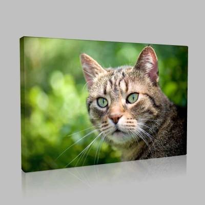 Düşünceli Kedi Kanvas Tablo