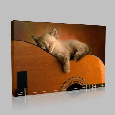 Gitarist Kedi Kanvas Tablo
