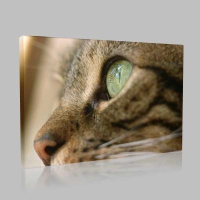 Kedi Gözü Kanvas Tablo