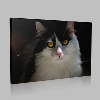 Kedi Portre Kanvas Tablo