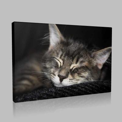 Kedi Uykusu Kanvas Tablo