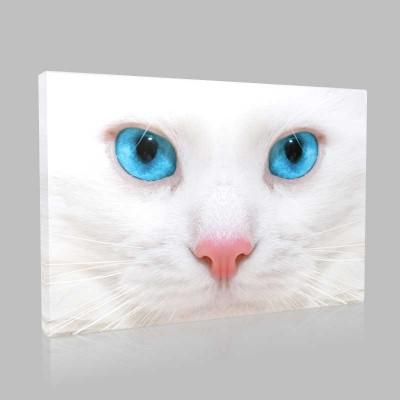 Kedi Yüzü Kanvas Tablo