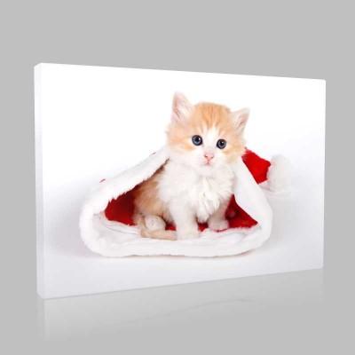 Kedi Yavrusu Kanvas Tablo