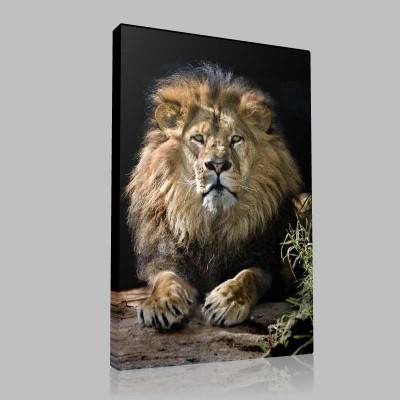 Kral Aslan Kanvas Tablo