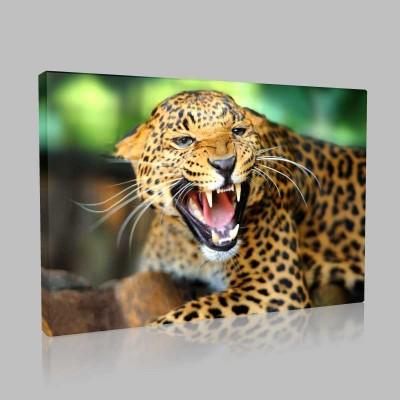 Leoparın Öfkesi Kanvas Tablo