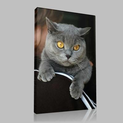 Mağrur Kedi Kanvas Tablo