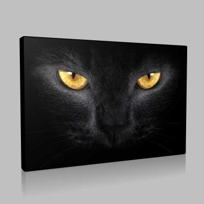 Siyah Kedi Kanvas Tablo