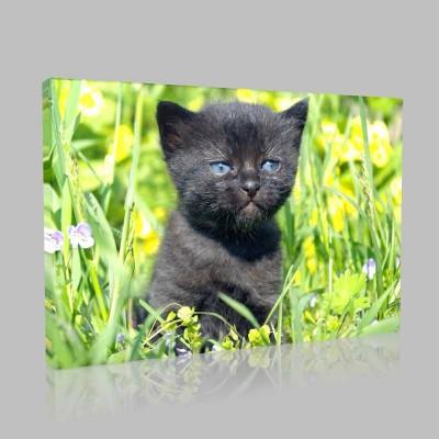 Siyah Kedi Yavrusu Kanvas Tablo