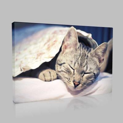 Uykucu Gri Kedi Kanvas Tablo