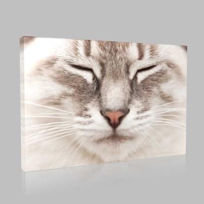 Uykucu Kedi Kanvas Tablo