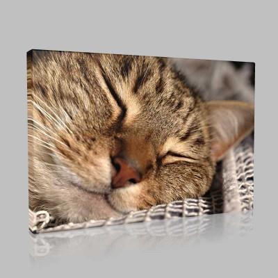 Uykunun Güzelliği Kanvas Tablo