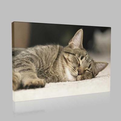 Uykunun Hafifliği Kanvas Tablo