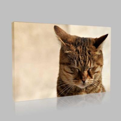 Uyuklayan Kedi Kanvas Tablo