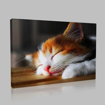 Uyuyan Kedicik Kanvas Tablo