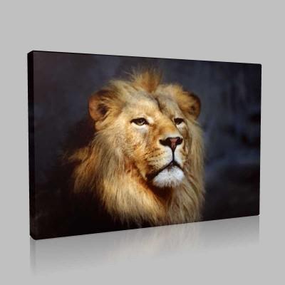 Vahşi Yaşamın Kralı Kanvas Tablo