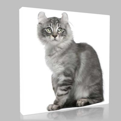 Gri Beyaz Kedi Kanvas Tablo