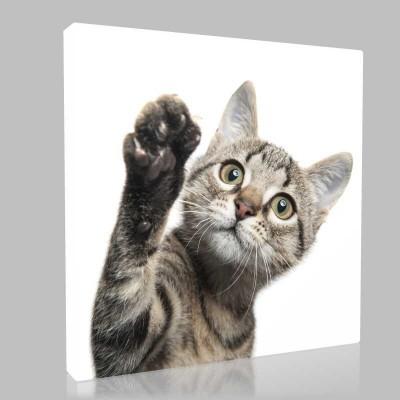 Kedi Dokunuşu Kanvas Tablo