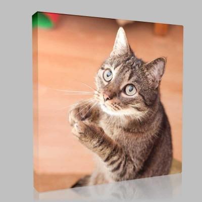 Masum Kedi Kanvas Tablo