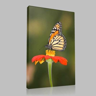 Çiçek Ve Kelebek Kanvas Tablo
