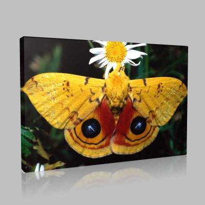 Büyük Kelebek Kanvas Tablo