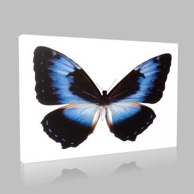 Mavi Siyah Kanvas Tablo