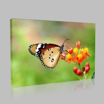 Renkli Çiçek Ve Kelebek Kanvas Tablo