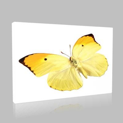 Sarı Kelebek Kanvas Tablo