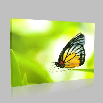 Sarılı Siyahlı Kelebek Kanvas Tablo